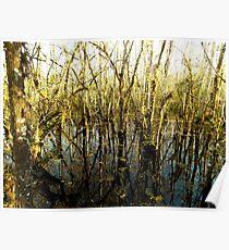 Swamp Lake Poster