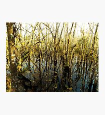 Swamp Lake Photographic Print