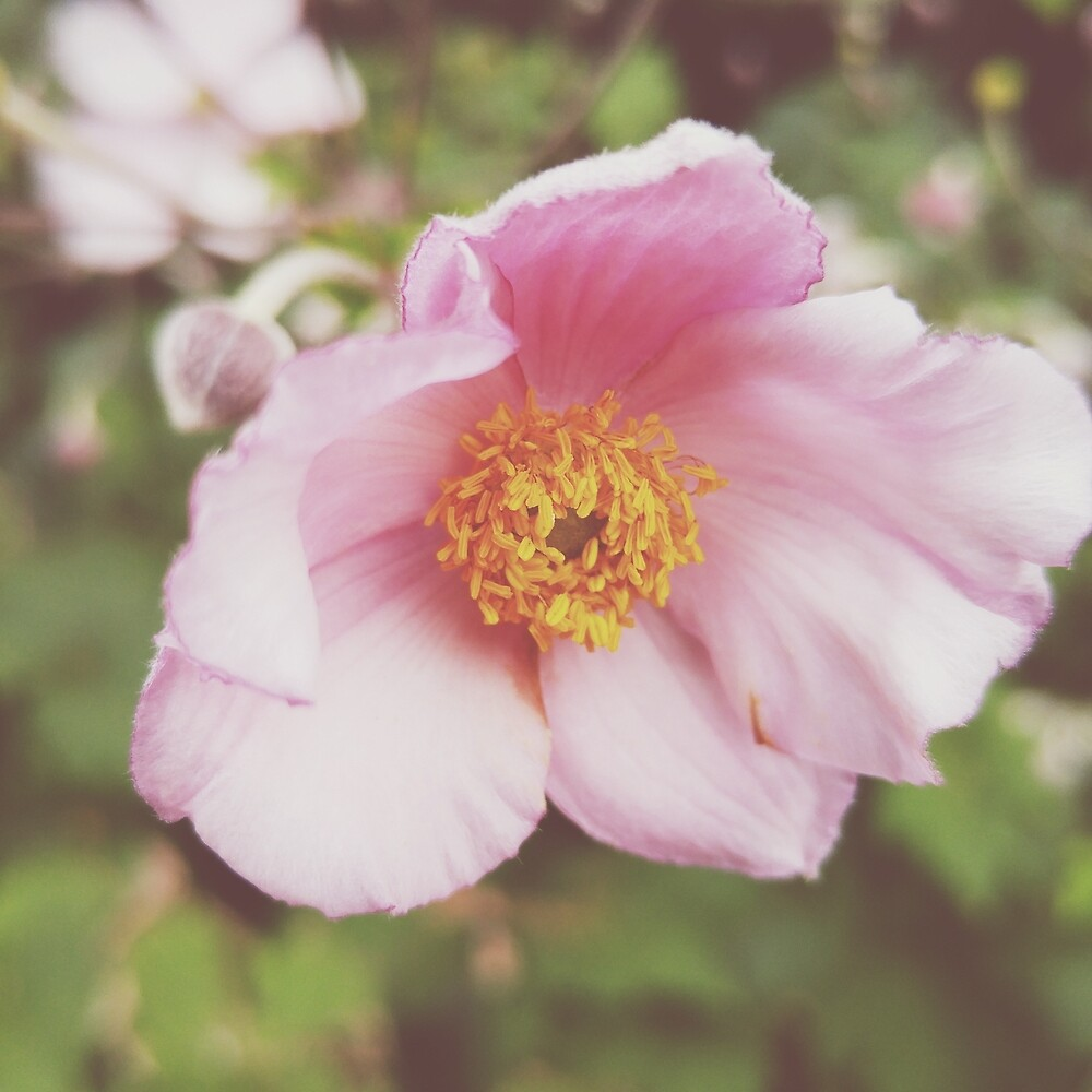 Pink Flower by CHCK
