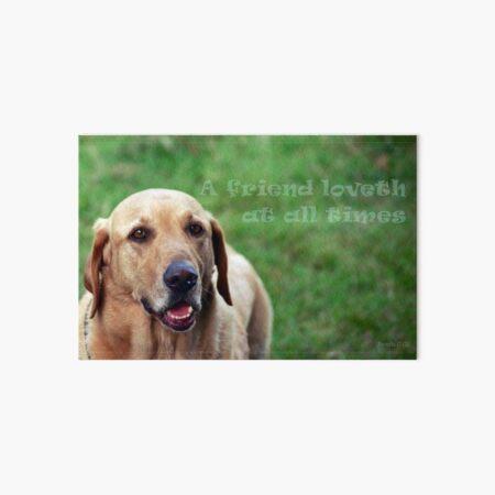 Labrador Dog Scripture Art Proverbs 17:17 Art Board Print