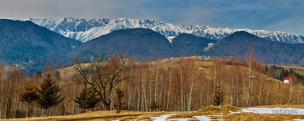 Mountain range and trees by naturalis