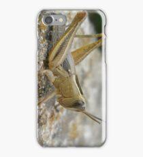 Young anacridium aegyptium  iPhone Case/Skin