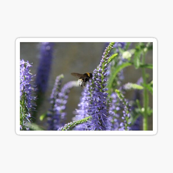 Busy Bumble Bee in Flight Sticker