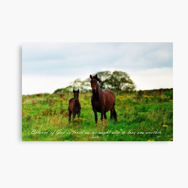 Mare and Foal Scripture Art Photography Love One Another Canvas Print