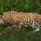 Jaguar Stalking Prey by Walter Colvin