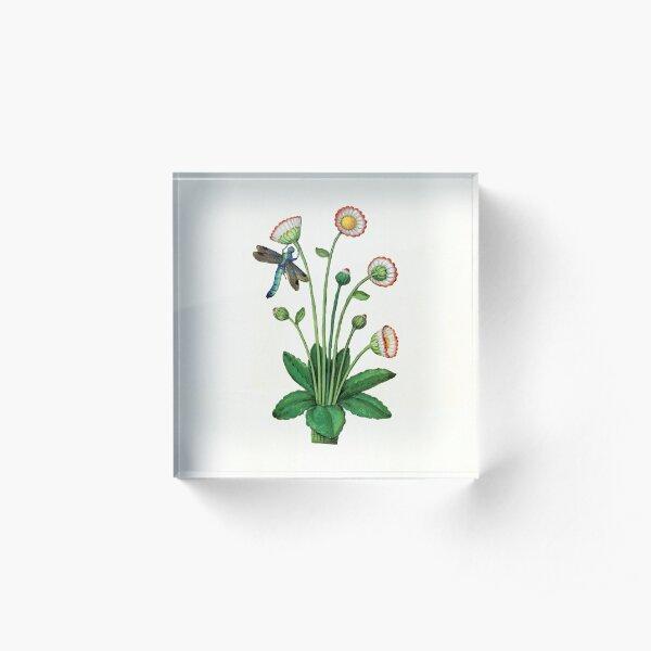 Daisy days Acrylic Block