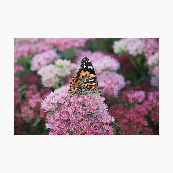 Pretty Wings Photographic Print
