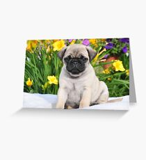 Cute Puppy Caesar the Pug by AiReal Apparel Greeting Card