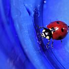 Blue Ladybug by aprilann