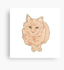 Most Beloved Feral Cat / Ginger Metal Print