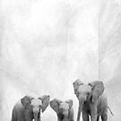 Elephants by Melinda Kerr