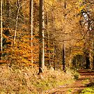 Autumn colors, riverside walk, November 2103  by Hugh McKean