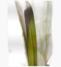 Blade of grass in bright sunshine Poster