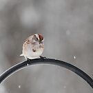 Snowing Again! by Rose Landry