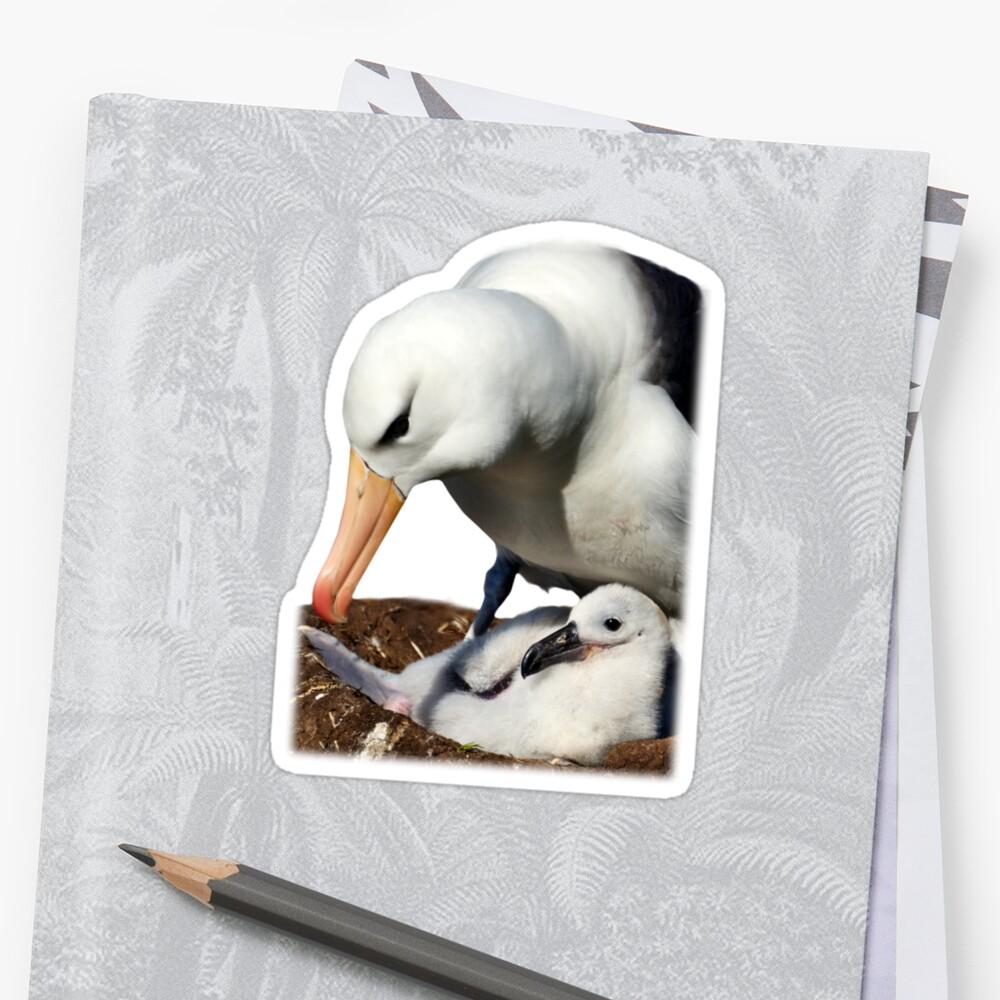 Black-browed Albatross, Falkland Islands by Geoffrey Higges