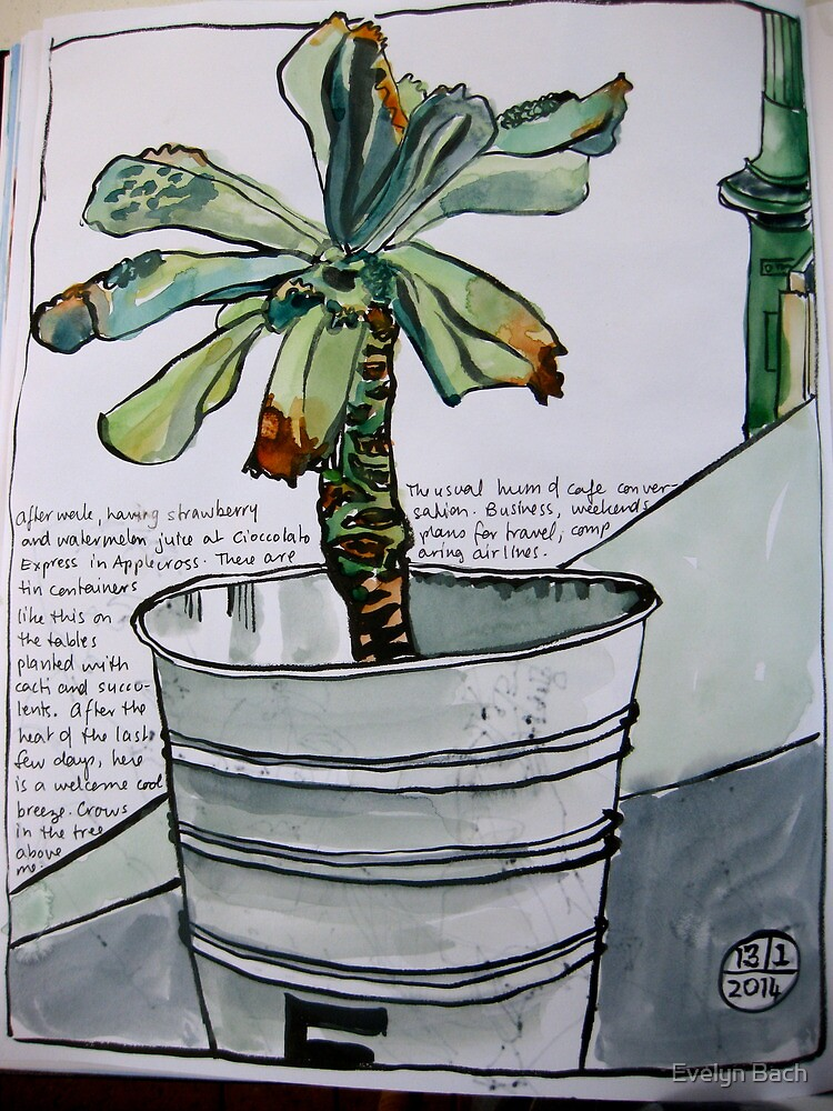 succulent in a tin bucket by Evelyn Bach