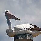 Pole-sitting Pelican by Gary Kelly