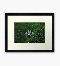 Rain drops on flowers Framed Print