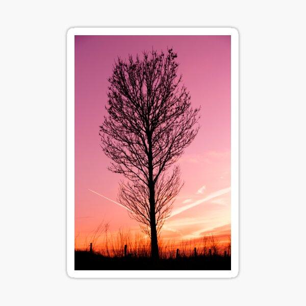 Tree silhouette, landscape photo Sticker