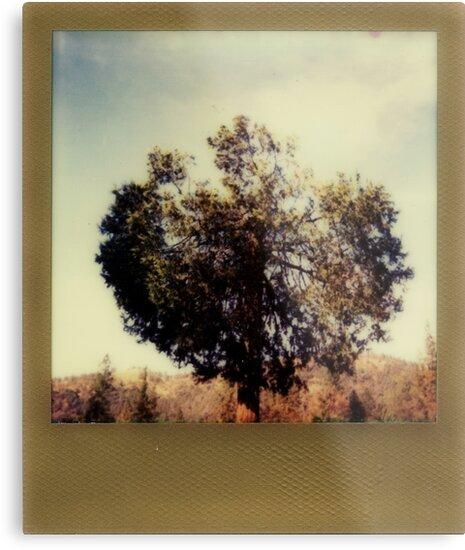 taraxacum by Jill Auville