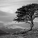 The tree Bilbo left behind looking out to the lonely mountains on a winter's late afternoon. by clickinhistory
