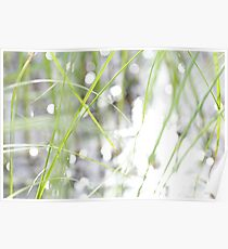 Green grasses and sun reflections on a lake Poster