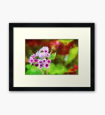 Wild and Crazy Ageratum! Framed Print