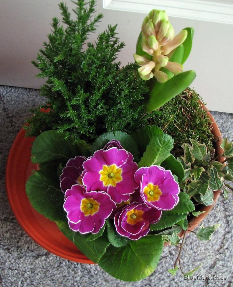 Primrose, Budding Hyacinth and a Little Tree by BlueMoonRose