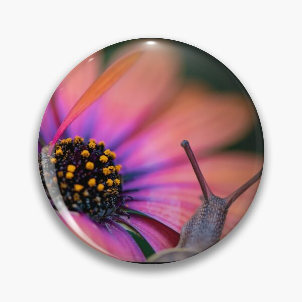 The snail whose flower's so bright he's gotta wear shades. Pin