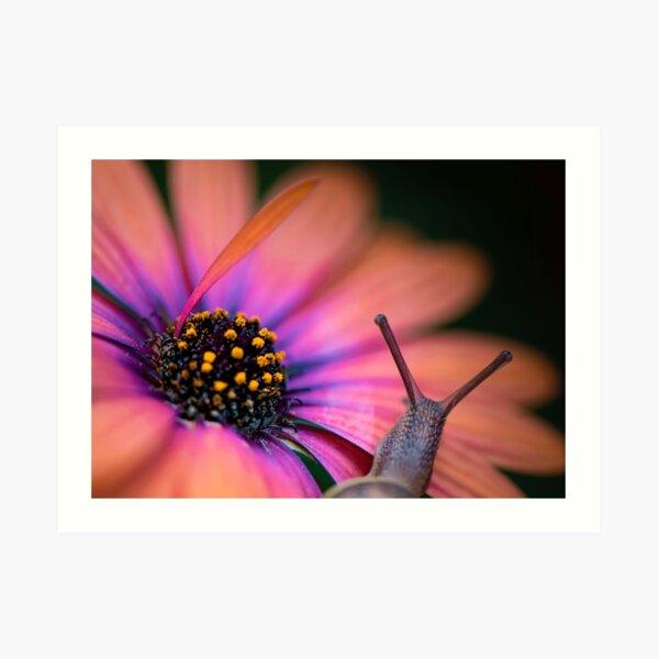 The snail whose flower's so bright he's gotta wear shades. Art Print