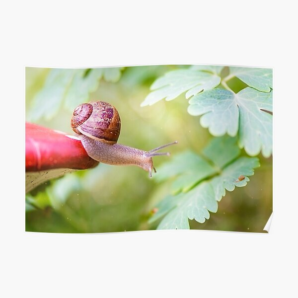 The snail who defies gravity to reach her kid. Poster
