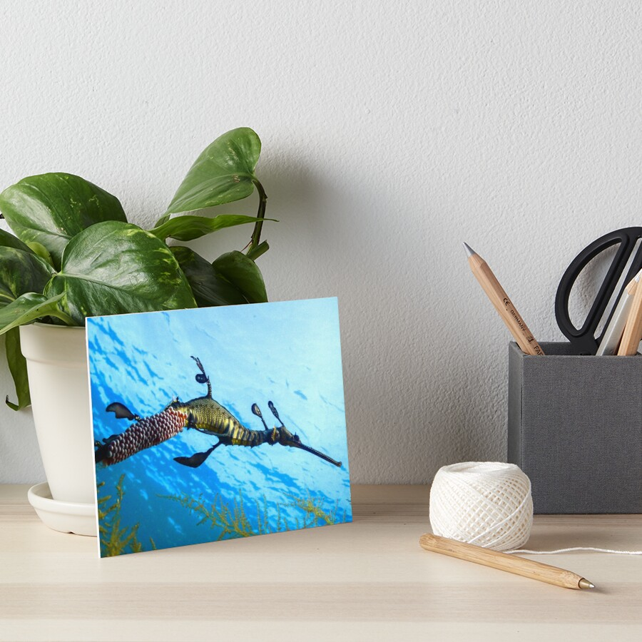 Weedy Seadragon with eggs under the sea Art Board Print