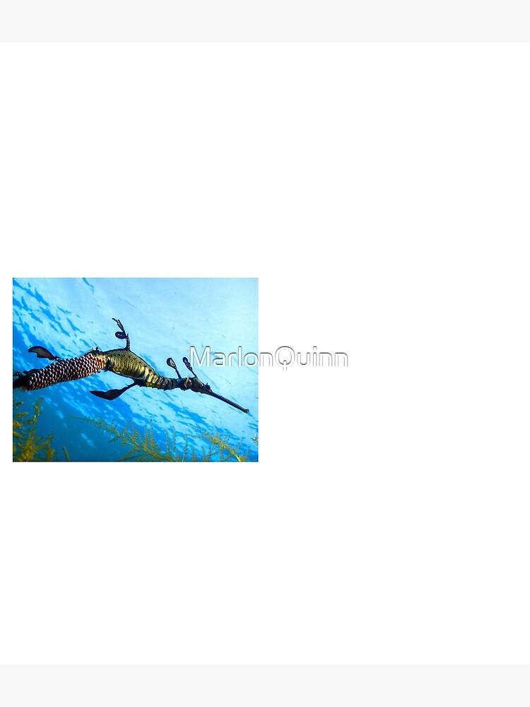 Weedy Seadragon with eggs under the sea by MarlonQuinn