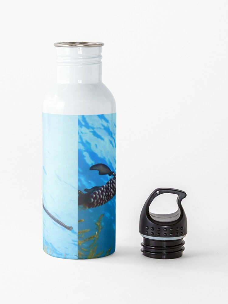Alternate view of Weedy Seadragon with eggs under the sea Water Bottle