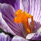 bloom1 by telley20