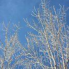 Icy Blue by AbigailJoy