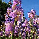 purple by telley20
