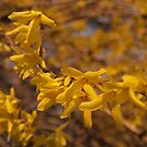 yellow 2 by telley20