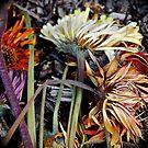 Colourful stillness by Joel Fourcard