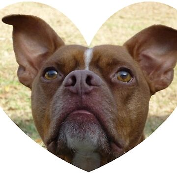 Red Nose Pit by LittleCsDesigns