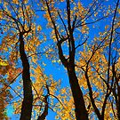 trees1 by telley20