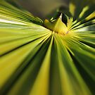palm 1 by telley20