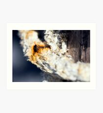 A consummate and corroded rusty nail Art Print