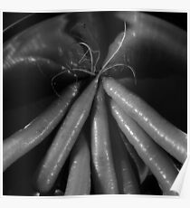 Tasty carrots in a colander - monochrome Poster