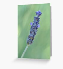 Lavender on muted green Greeting Card