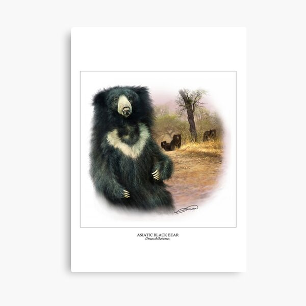 ASIATIC BLACK BEAR Canvas Print