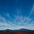 Bridestowe Lavender Farm by Keith Midson