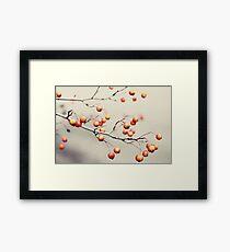 berries in the woods Framed Print