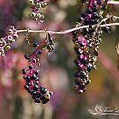 Autumn Pokeweed II by NatureExplora