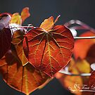 Spring Redbud by NatureExplora